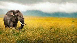 Animals And Flowers Photo Download