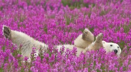 Animals And Flowers Photo Free