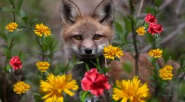 Animals And Flowers Wallpaper