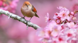 Animals And Flowers Wallpaper For PC