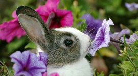 Animals And Flowers Wallpaper Full HD