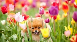 Animals And Flowers Wallpaper Gallery