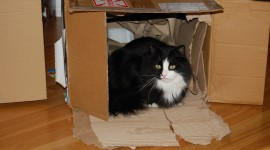 Animals In A Box Photo Download