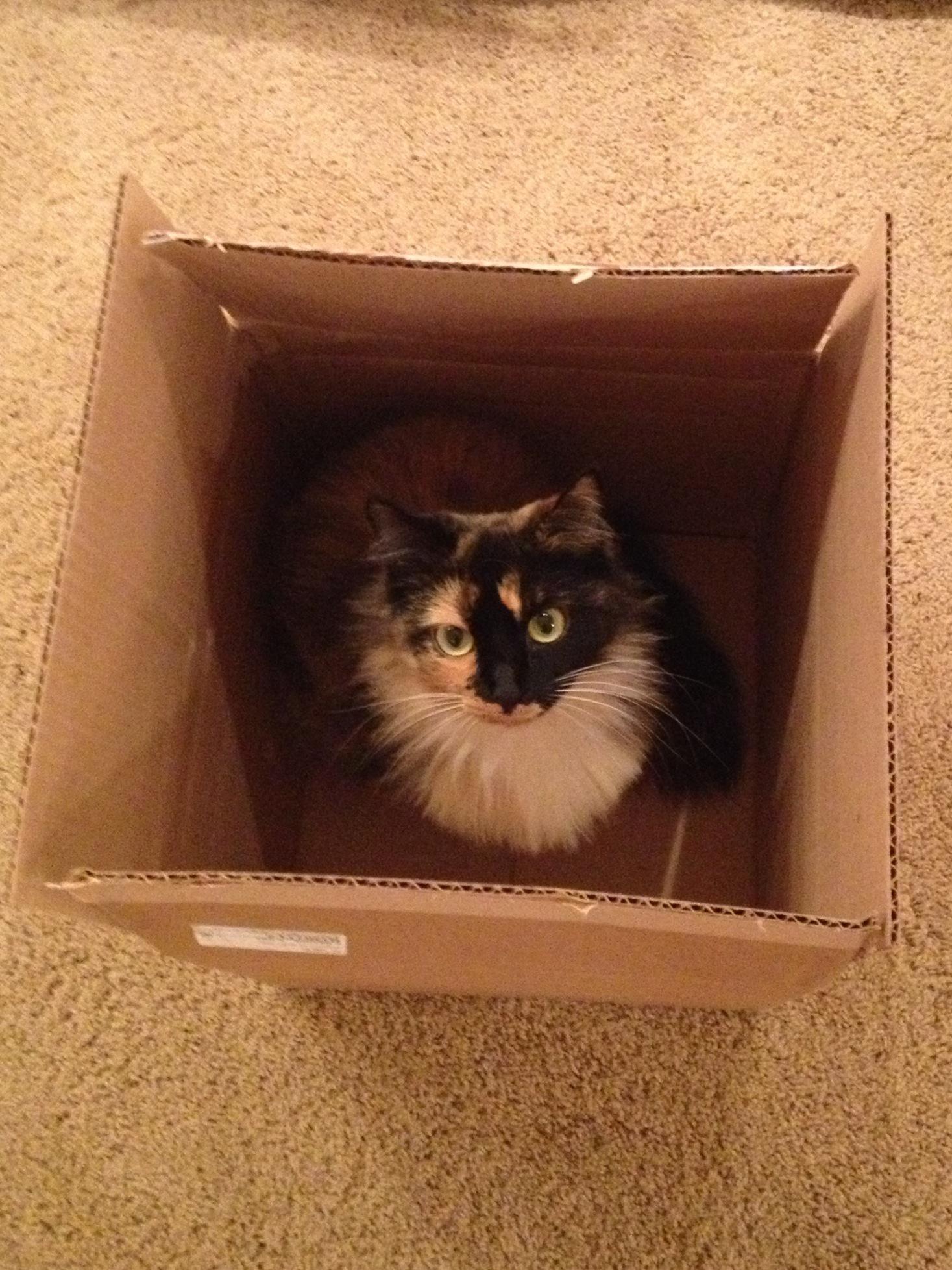 Wok In A Box Burswood