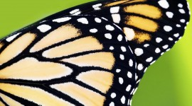 Butterfly Wing Best Wallpaper