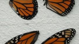 Butterfly Wing Desktop Wallpaper