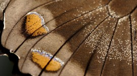 Butterfly Wing Desktop Wallpaper For PC