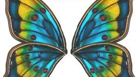 Butterfly Wing Desktop Wallpaper HD