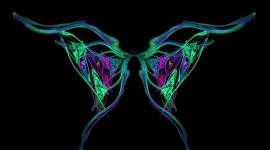 Butterfly Wing Image