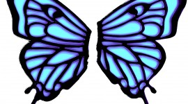 Butterfly Wing Photo