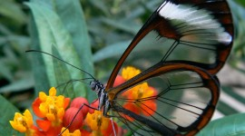 Butterfly Wing Photo Download