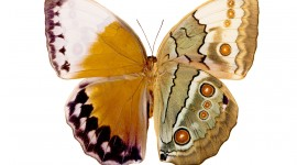 Butterfly Wing Photo Free