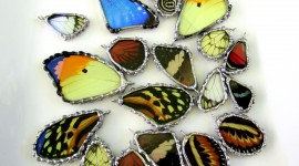 Butterfly Wing Pics