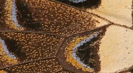 Butterfly Wing Wallpaper For Desktop