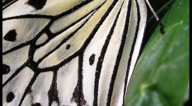 Butterfly Wing Wallpaper For PC