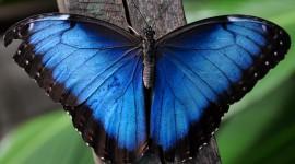Butterfly Wing Wallpaper Free