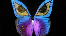 Butterfly Wing Wallpaper Full HD