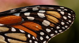 Butterfly Wing Wallpaper Gallery
