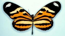 Butterfly Wing Wallpaper HQ