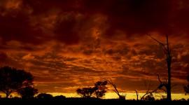 Dawn In The Desert Wallpaper