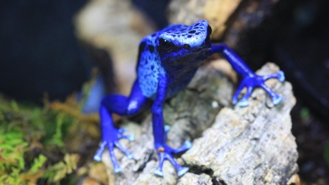 Dendrobates wallpapers high quality