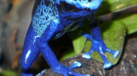 Dendrobates Wallpaper For Android