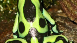 Dendrobates Wallpaper For IPhone