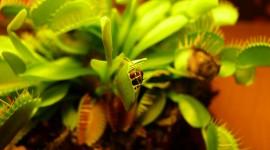 Dionaea Muscipula Wallpaper For PC