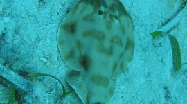 Electric Ray Wallpaper For IPhone