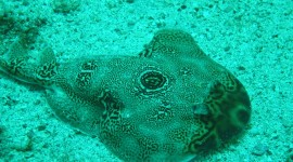 Electric Ray Wallpaper Gallery