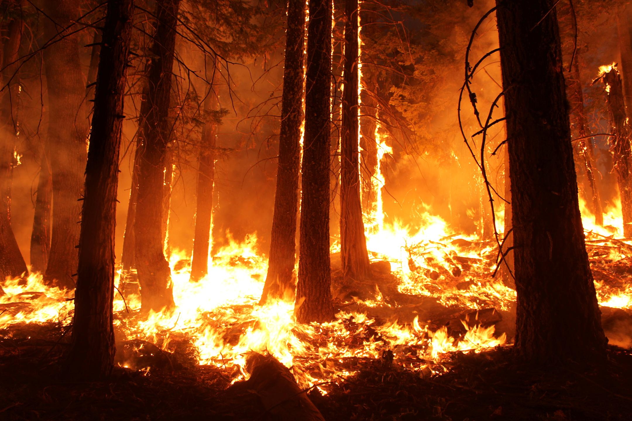 Fire woods wallpapers high quality download free fire woods wallpapers voltagebd Gallery