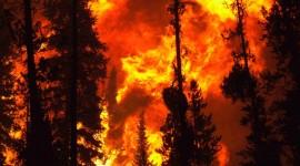 Fire Woods Pics