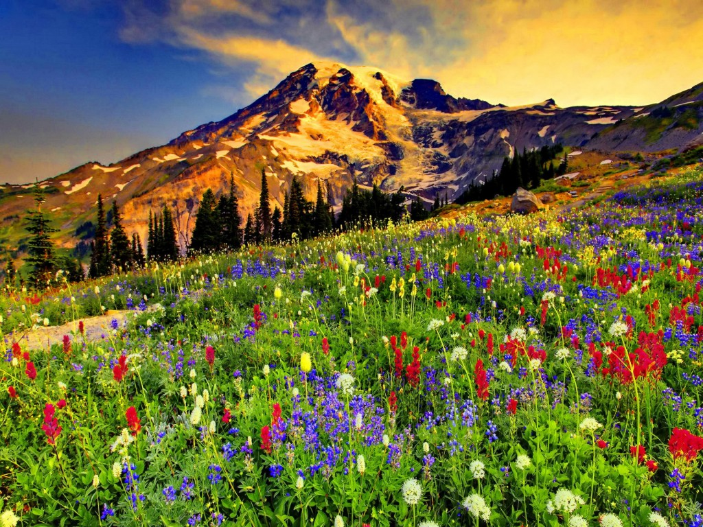 Flowers In The Mountains wallpapers HD