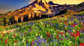 Flowers In The Mountains Best Wallpaper