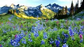 Flowers In The Mountains Desktop Wallpaper
