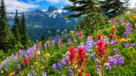 Flowers In The Mountains Photo Free