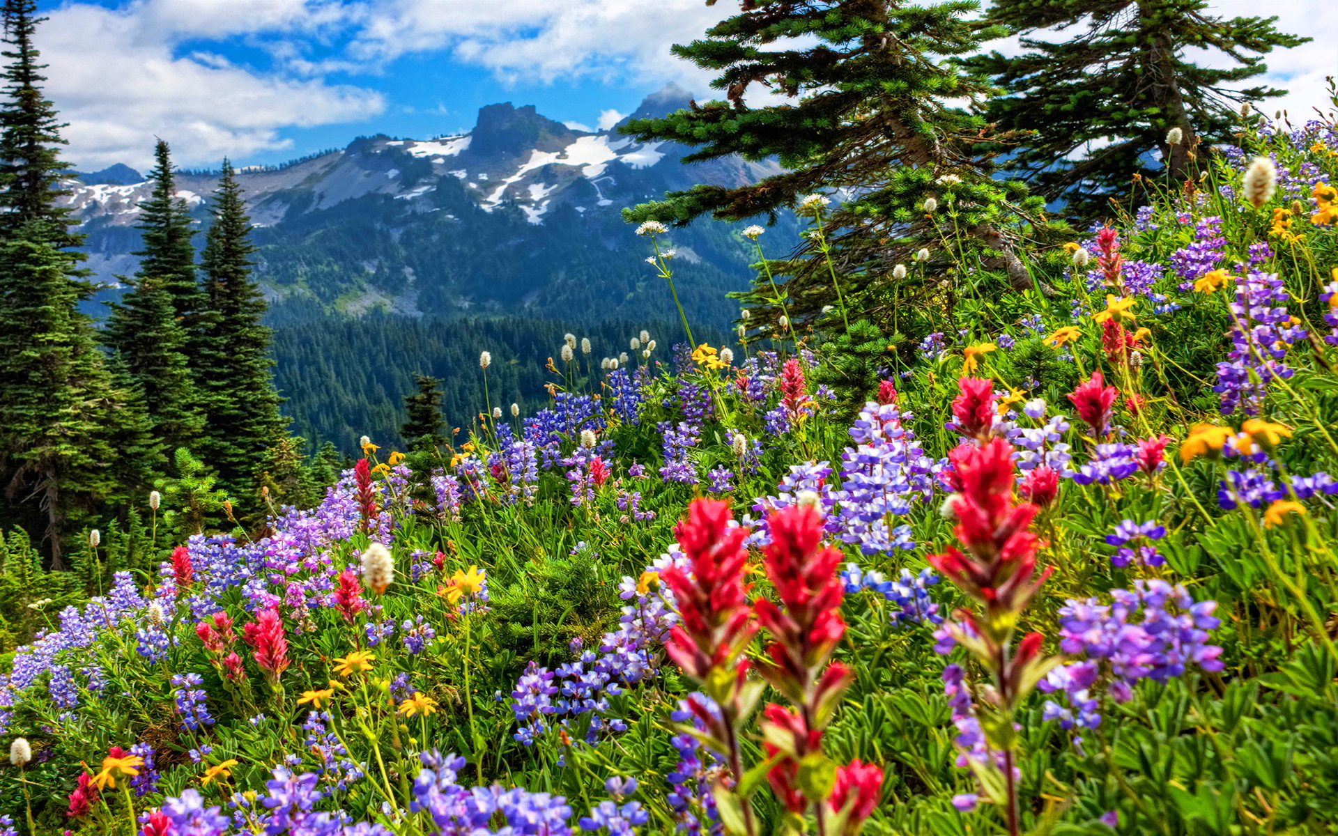 flowers in the mountains wallpapers high quality download fr
