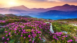 Flowers In The Mountains Photo#2