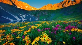Flowers In The Mountains Photo#3
