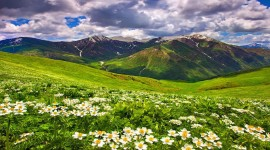 Flowers In The Mountains Photo#4