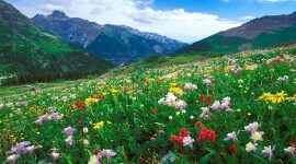 Flowers In The Mountains Wallpaper 1080p