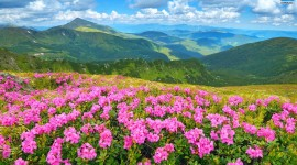 Flowers In The Mountains Wallpaper 1080p#1