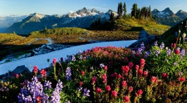 Flowers In The Mountains Wallpaper 1080p#2