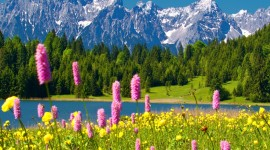 Flowers In The Mountains Wallpaper