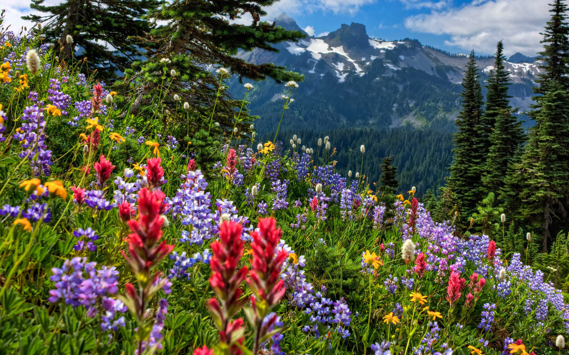 Flowers In The Mountains Wallpapers High Quality