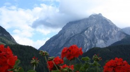 Flowers In The Mountains Wallpaper Free