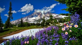 Flowers In The Mountains Wallpaper Gallery