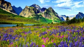 Flowers In The Mountains Wallpaper#3