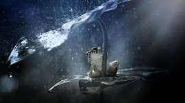 Frog With Umbrella Wallpaper Download