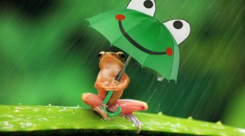 Frog With Umbrella Wallpaper For PC